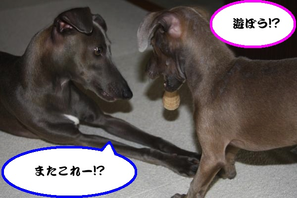 IMG_7100-1_convert_20120604212107.jpg
