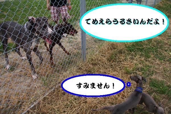 IMG_7822-1_convert_20120615201239.jpg