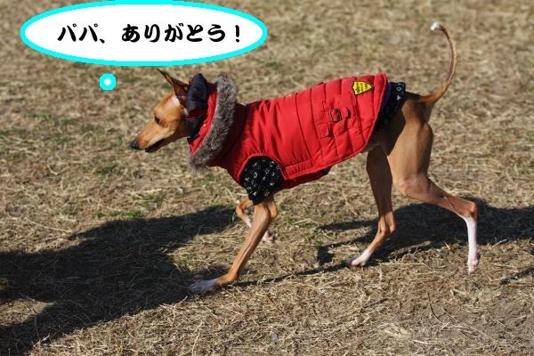 IMG_8336-1_convert_20121227215717.jpg