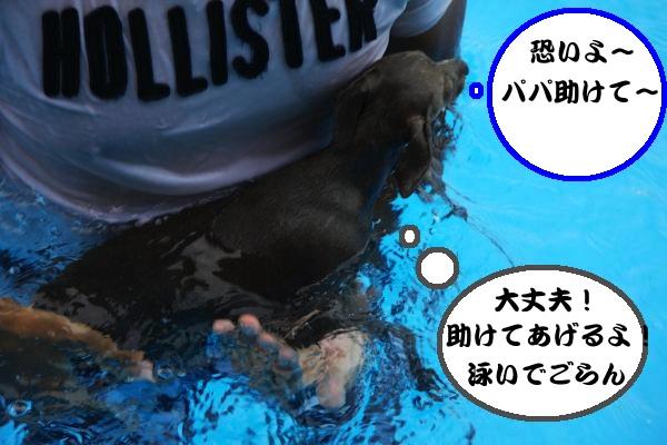 IMG_8674-1_convert_20120713220540.jpg