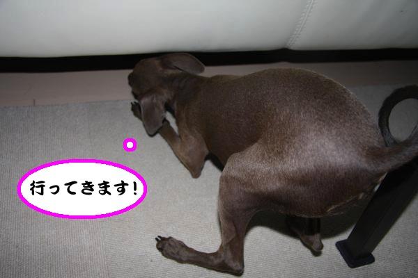 IMG_9574-1_convert_20120722220747.jpg
