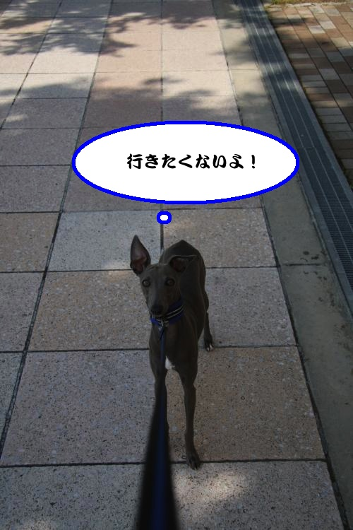 IMG_9780-1_convert_20120727225029.jpg