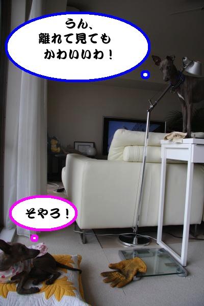 IMG_9847-1_convert_20120728220330.jpg