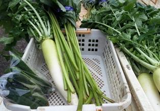 小島さんちの野菜