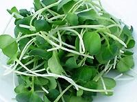 つまみ菜材料