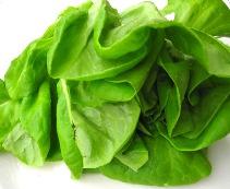 サラダ菜写真