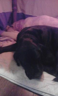 コタツ犬①20131221