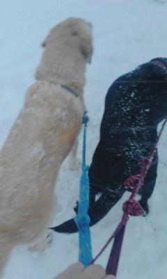 Sora20140208_1656大雪です