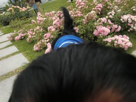 CIMG0697_20120615105928.jpg