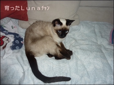 Luna001.jpg