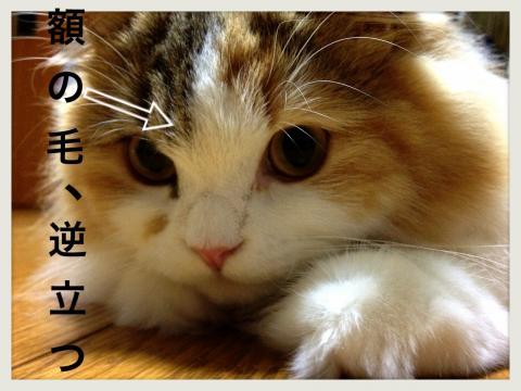 IMG_3899_convert_20121015183807.jpg