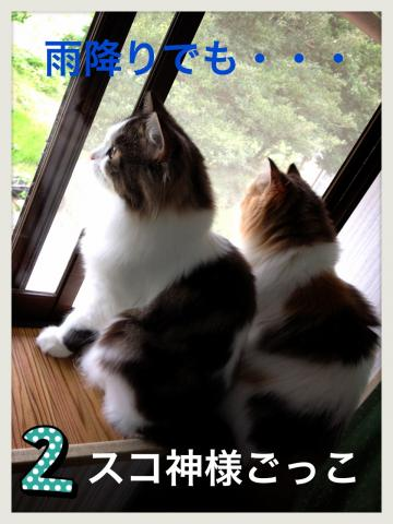 IMG_4007_convert_20121023173031.jpg