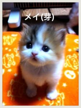IMG_4299_convert_20121031190145.jpg