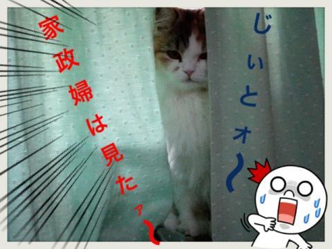 IMG_5035_convert_20121119173653.jpg