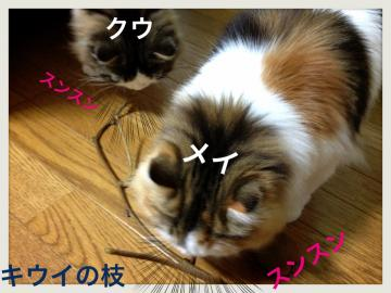 IMG_5377_convert_20121129192026.jpg