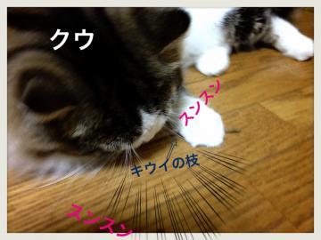 IMG_5378_convert_20121129192102.jpg