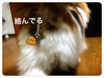 IMG_5562_convert_20121201191944.jpg