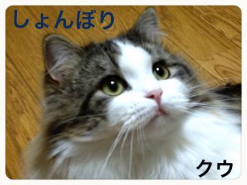 IMG_5714_convert_20121203193948.jpg