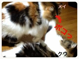 IMG_6049_convert_20121210195341.jpg