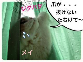 IMG_6052_convert_20121210195556.jpg