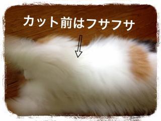 IMG_6233_convert_20121212205652.jpg