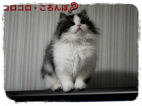 IMG_6333_convert_20121213214440.jpg
