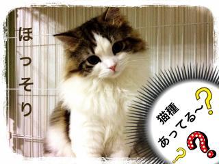 IMG_6342_convert_20121214201334.jpg