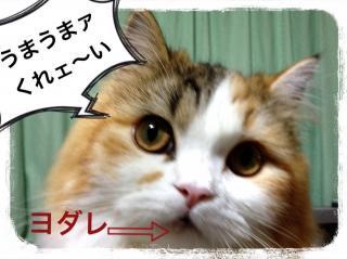 IMG_6381_convert_20121215193140.jpg