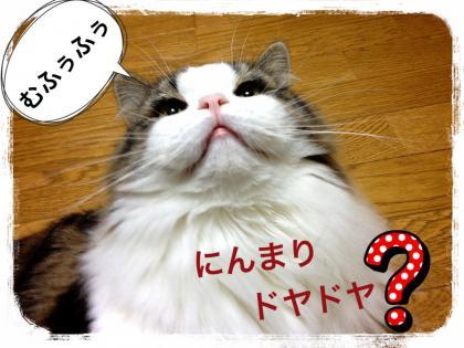 IMG_6390_convert_20121216190455.jpg