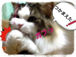 IMG_6541_convert_20121218201941.jpg
