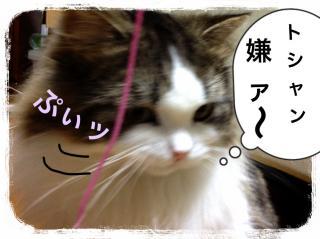 IMG_6542_convert_20121218202010.jpg