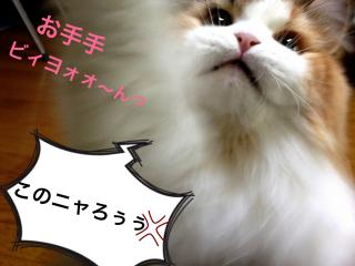 IMG_6585_convert_20121220193720.jpg
