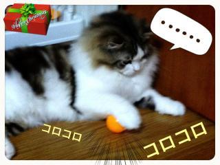 IMG_6721_convert_20121224194255.jpg