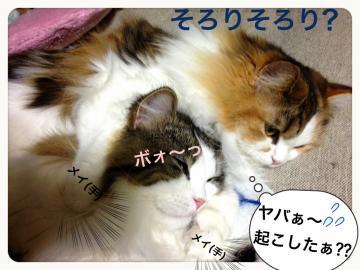 IMG_6735_convert_20121225202931.jpg