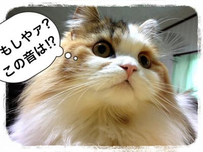 IMG_6863_convert_20121229003657.jpg