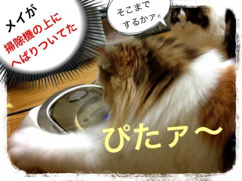 IMG_6892_convert_20121229003852.jpg