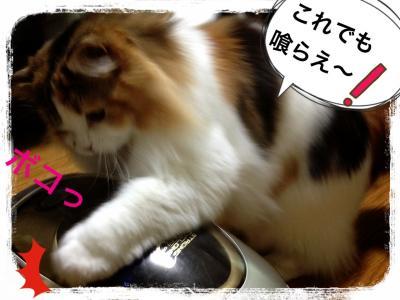 IMG_6895_convert_20121229004045.jpg