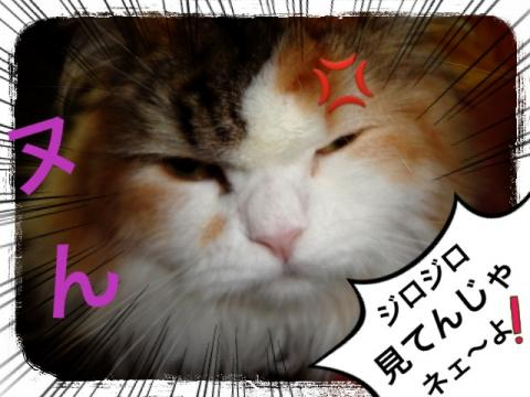 IMG_6953_convert_20121230083315.jpg