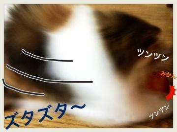 IMG_7209_convert_20130103161123.jpg