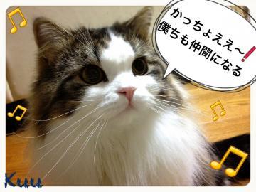 IMG_7582_convert_20130111201931.jpg