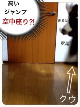 IMG_8137_convert_20130118203528.jpg