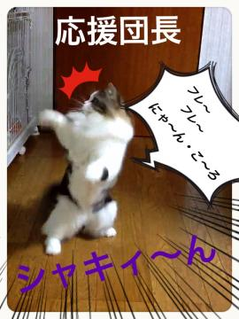 IMG_8138_convert_20130118203627.jpg