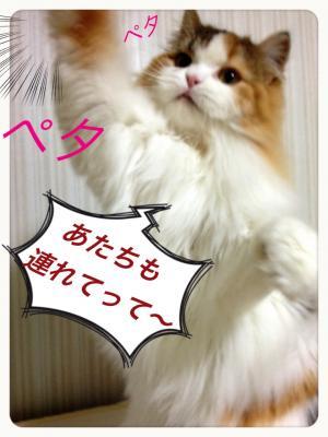 IMG_8648_convert_20130125193907.jpg