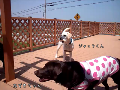 20120505-7.png
