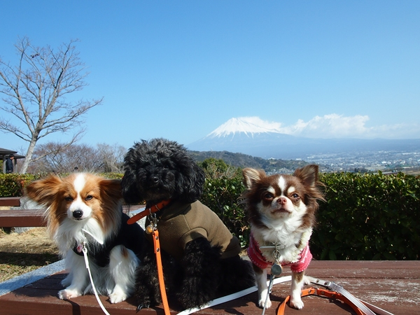 富士山と姫たま~ず