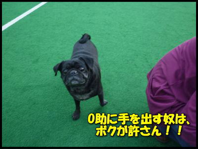 image10_20120510230432.jpg