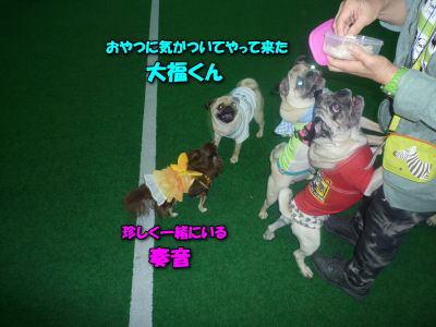 image10_20120615140358.jpg