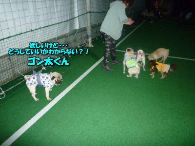 image11_20120615140358.jpg