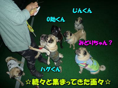 image13_20120615140358.jpg