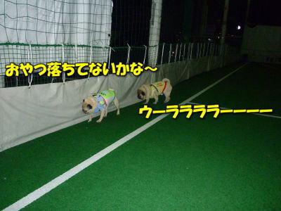 image5_20120614103109.jpg